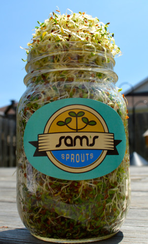 Sams Sprouts Kit