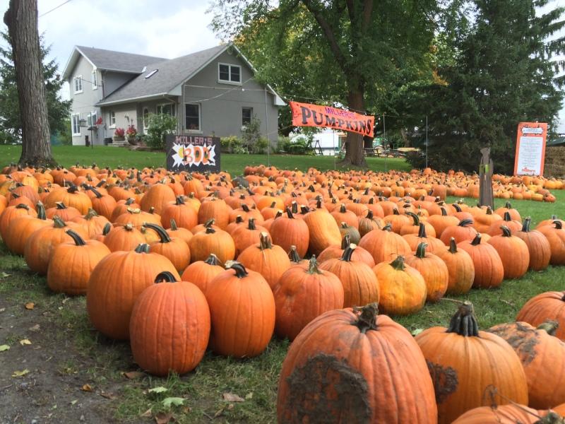 Millers Farm Pumpkin Patch Manotick Ontario
