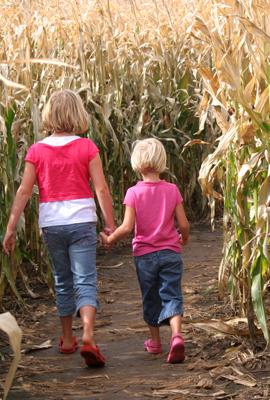 Millers Farm Market Corn Maze