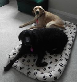 Barrhaven Dog Care