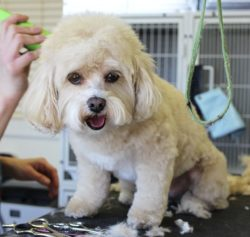 Barrhaven Dog Grooming Service