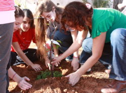 Barrhaven Tree Planting